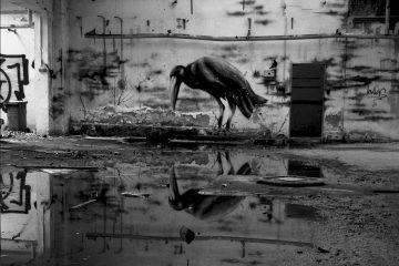 Ein Graffiti Rabe spiegelt sich