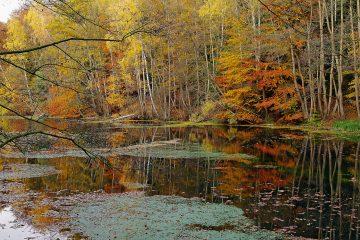 Kleiner See im Sachsenwald.