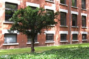 Marlies Heinsohn - Inselpark Willhelmsburg 23.07.2020 - Kontrast zur modernen Bauweise im Inselpark