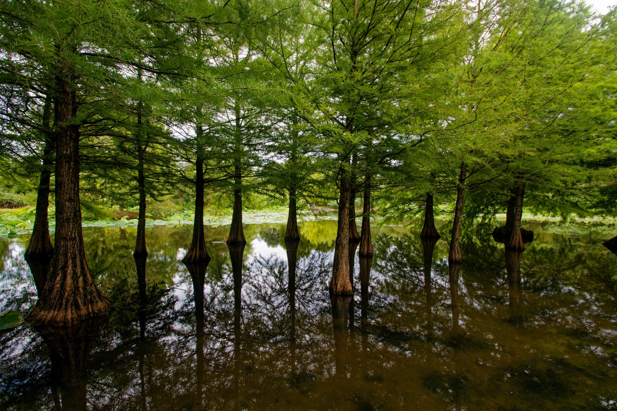 Bodo Jarren- Arboretum Ellerhoop 03.08.2021 - Wasserwald