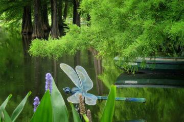 Susanne Wahl - Arboretum Ellerhoop 03.08.2021 - Gelandet