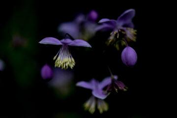 Ute - Arboretum Ellerhoop 03.08.2021 - Pretty in Lila