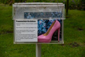 Hans Stötera - Arboretum Ellerhoop 03.08.2021 - Rosa...