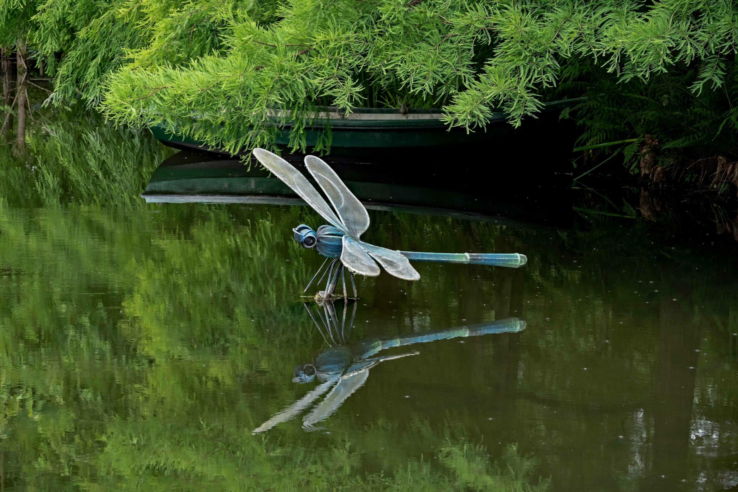 Hans Stötera - Arboretum Ellerhoop 03.08.2021 - Urzeit Libelle