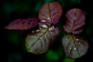 Ute - Arboretum Ellerhoop 03.08.2021 - Wasser ist Leben