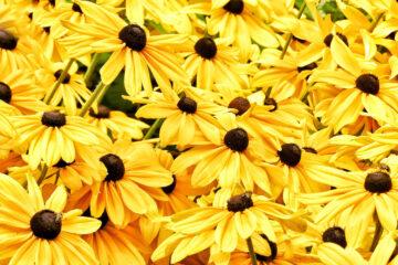 Susanne Wahl - Arboretum Ellerhoop 03.08.2021 - Yellow Summer