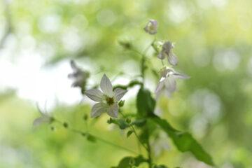 Susanne Wahl - Arboretum Ellerhoop 03.08.2021 - Zart besaitet