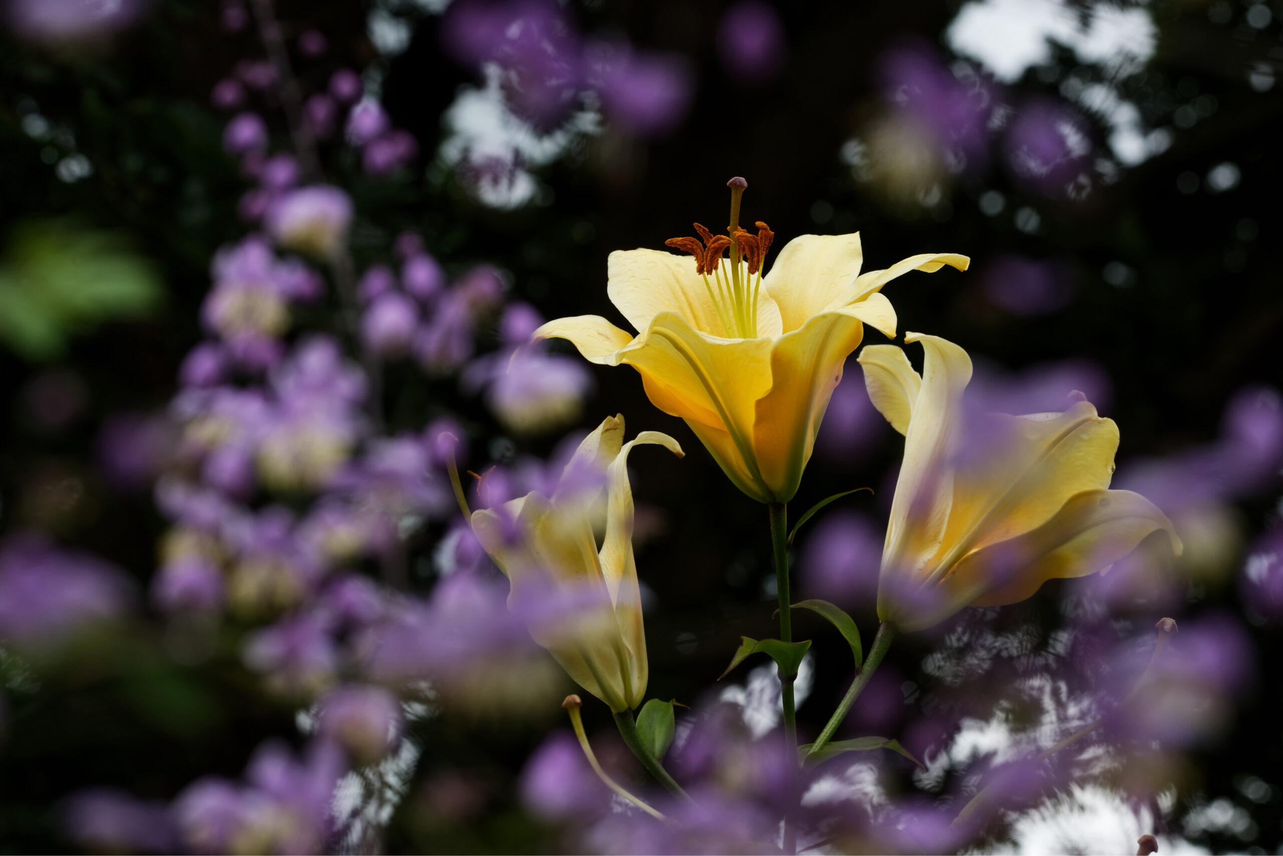 Matthias - Arboretum Ellerhoop 03.08.2021 - Durch die Blume