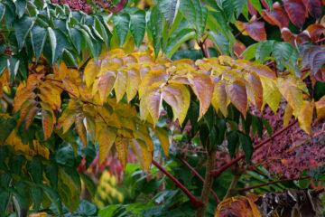 Bodo Jarren - Stadtpark 05.10.2021 - Der Herbst ruft