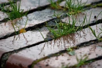 Bodo Jarren - Stadtpark 05.10.2021 - Es war nass